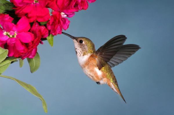 Cui ii este mai greu să-și cucerească marea dragoste? Omului sau plantelor?